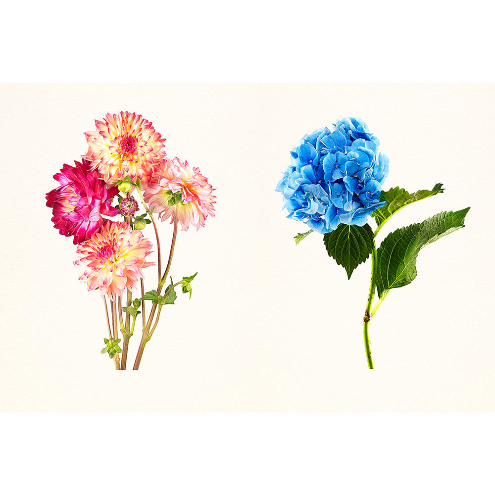 THE MOST BEAUTIFUL FLOWERS/Kenji Toma 【Collectors Edtion】