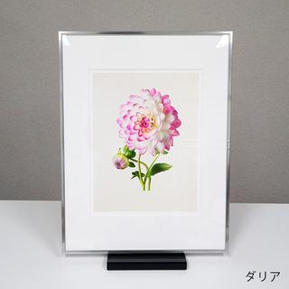 THE MOST BEAUTIFUL FLOWERS /Kenji Toma オリジナルプリント メタルフレーム 全6種